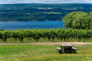 Wagner Vineyards' prime location on the eastern shore of Seneca Lake contributes to the superior quality of the grapes.